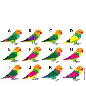 Zwei Vögel sehen genau gleich aus.Kannst du sie finden?