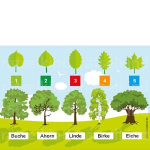 Linde, Birke, Buche, Eiche, Ahorn