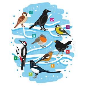 Kinderrätsel Vogelarten im Winter