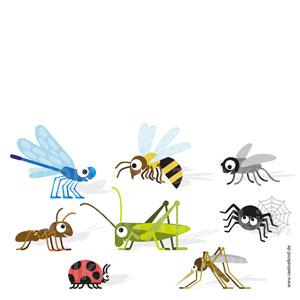 Beine der Insekten und Spinnen