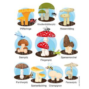 Suchbild Pilznamen