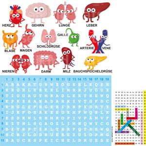 Buchstabensalat Medizin Organe Menschliche Organe Anatomie