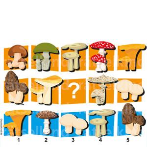 Welcher Pilz fehlt im Feld mit dem Fragezeichen, wenn alle Bilder verschieden sein sollen?